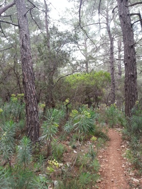 Türkischer Wald