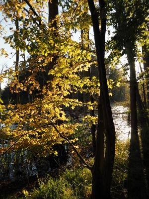 Herbst am Schweingartensee