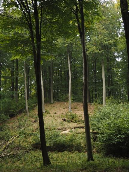 Das Tor im Wald
