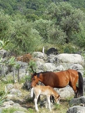 Pferd und Minipferd