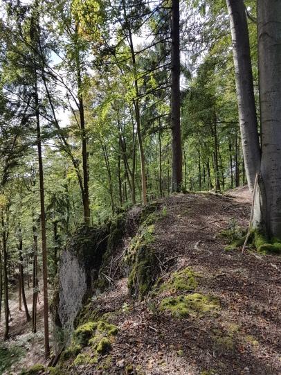 ...durch den Laubwald