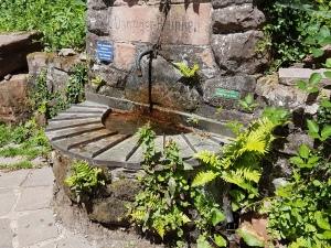 Danziger Quelle mitten im Wald - köstliches Wasser!