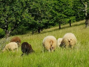 Diese Schafe haben gemerkt, dass ich nichts Leckeres für sie habe