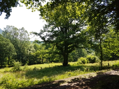 Weg kurz hinter Dernbach