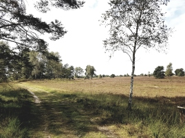 Übergang zum Wald