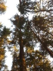 Blick aus der Matte in die Bäume