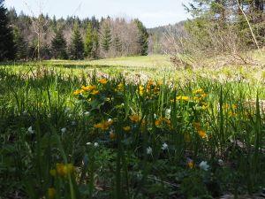 Frühling auf der Wiese Nähe Zwiesel
